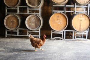 chicken in cellar