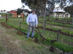 plough5 under vine weed