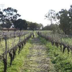 Swan Valley Pruning for pizza