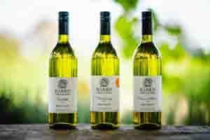 FREE DELIVERY - White Wine Case