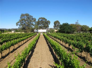 Grape Pickers Lunch - Waiting List